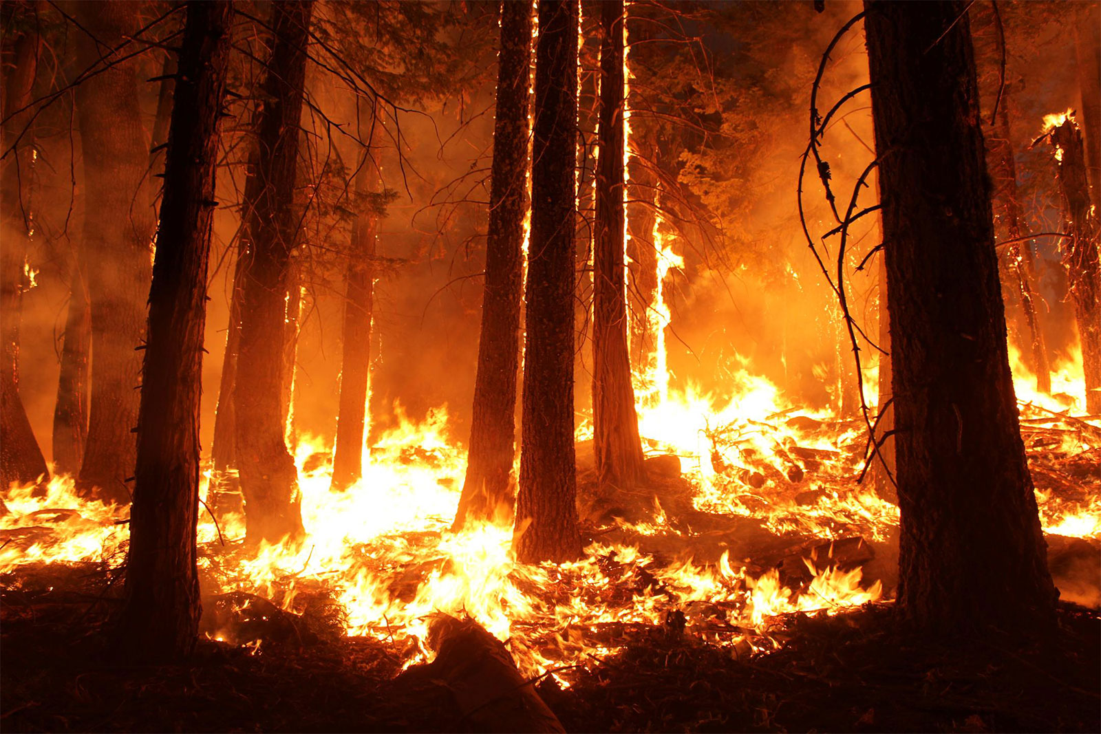 Course Image NRF 323: Forest Fire Ecology and Management