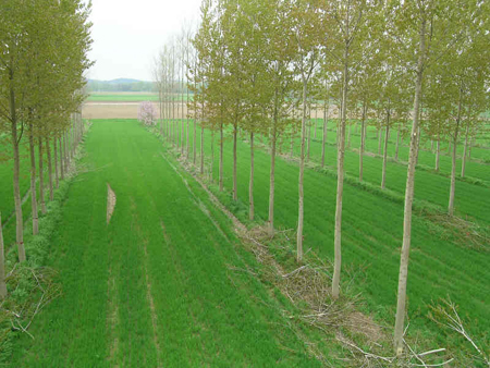 Course Image NRF 327a: Agroforestry and Soil Management