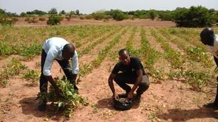 Course Image NRM 327b: Integrated Soil Fertility Management (ISFM)