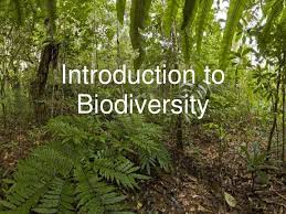 Course Image AEC 102- Introduction to Biodiversity
