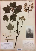 Course Image BIOL 327 ¬ Vegetation & Herbarium Studies