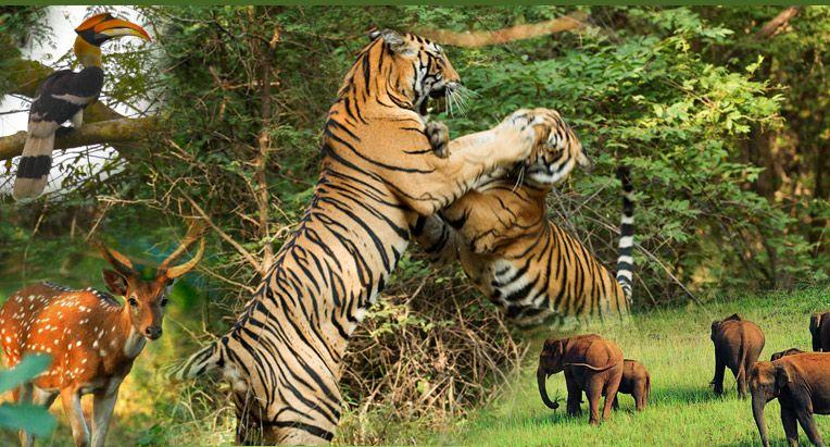 Course Image EMQC 3221 Environmental Wildlife Management Techniques